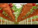 Грядки для клубники идеи для дачи сада и огорода от дачников садоводов хенд мейд своими руками