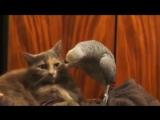 попугай разговаривает с котом?????
