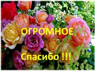 http://cs631625.vk.me/v631625222/1eaac/VUcmPcZCc7M.jpg