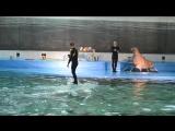 Дельфинарий на Крестовском СПБ. Сёрфинг на полярном дельфине.