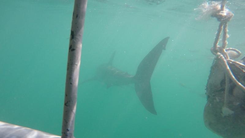 South Africa, Gansbaai Shark Alley vid. 1