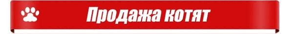 kaluga-best.ru/Kotyata/