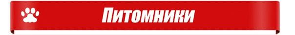 kaluga-best.ru/pitomniki/