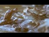 Безжалостный убийца - Нильский Крокодил - Документальный Фильм National Geographic