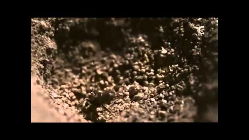 Documentaire 2015 Mini monstres en Amazonie les insectes documentaire en français 2015