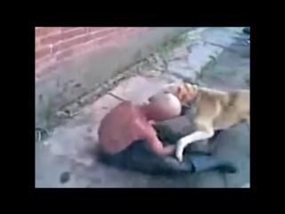 Собаки трахают алкашей