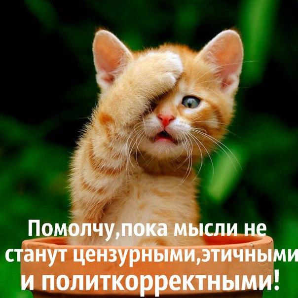 http://cs631627.vk.me/v631627354/346d3/YmE4tORTUM0.jpg