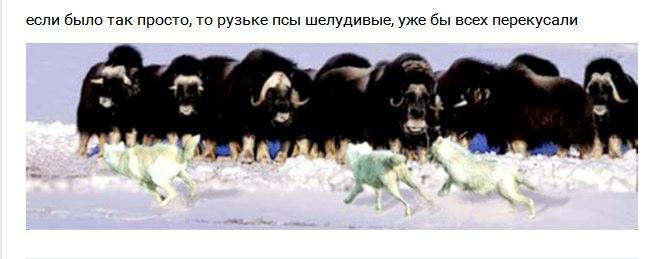 РФ проводит фильтрацию мужчин от 18 лет, выезжающих из Крыма на материковую Украину, - ГПСУ - Цензор.НЕТ 8238