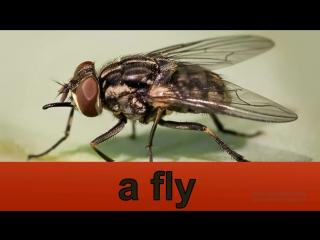 Английский для детей. Животные на английском языке.(насекомые на английском).1