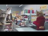 Как выглядит шоппинг в мире кошек