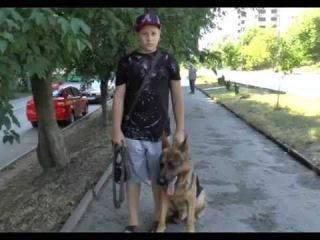 Одинадцятирічна дитина і півторарічна нім. вівчарка. Частина 3.