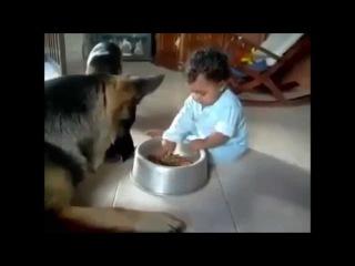 10 найсмішніших відео з німецькою вівчаркою / 10 самых смешных видео с немецкой овчаркой