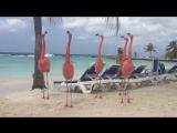 Необычные гости на пляже