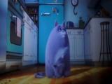 Тайная жизнь домашних животных (2016). Кошка Хлоя