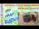 КИТАЙСКИЙ СПОСОБ ВЫРАЩИВАНИЯ  РАССАДЫ ТОМАТОВ!!!ЭТО НАДО ВИДЕТЬ!!!