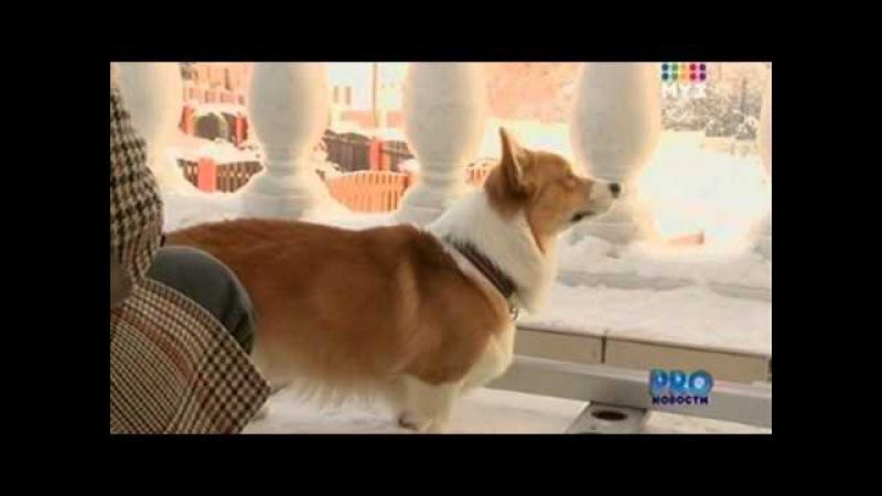 PROновости МУЗ ТВ от 20.01.2011. Воробьеву 23!