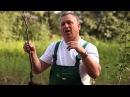 В какие сроки лучше сажать саженцы плодово - ягодных деревьев