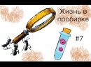 4 дня спустя Муравьи Myrmica sp 7