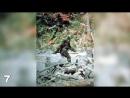 ФАКТЫ ИЛИ ВЫМЫСЕЛ 10 существ снятых на камеру.