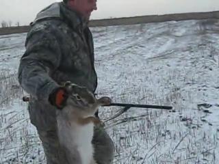 охота на зайца  [480p]