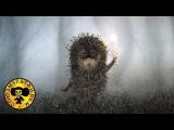 Ёжик в тумане  Советские мультфильмы для детей
