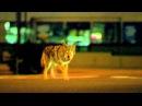Collateral 2004 Coyote Scene 1080p