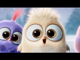 Поздравление с наступающим от Angry Birds!!!