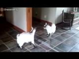 Весёлые козлы и козлята