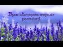 50 лучших противопаразитарных растений