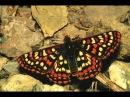 Личинка личности и крылья бабочки, готовые для полёта. ПРЕВРАЩЕНИЕ КУКОЛКИ В БАБОЧКУ.