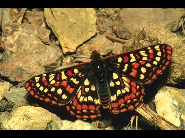 Личинка личности и крылья бабочки готовые для полёта ПРЕВРАЩЕНИЕ КУКОЛКИ В БАБОЧКУ