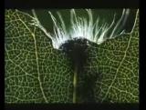 МикрокосмосMicrocosmos Le peuple de l'herbe (1996) Трейлер