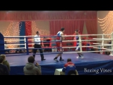 Amateur boxing (Alisafa) [Zebra]