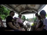 Прогулка на буйволе по острову Такетоми
