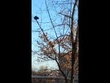 Черный кот на краю ветки. 25 декабря 2015 Таганрог