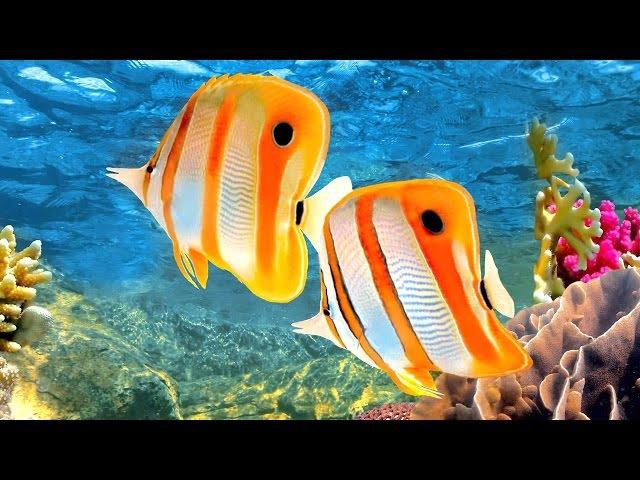 Coral Reef Aquarium The Best Relax Music - 2 Hours - Sleep Music - HD 1080P