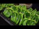 Как выращивают бананы современная банановая ферма