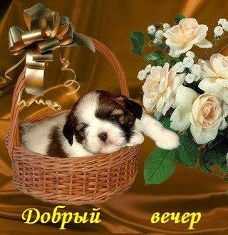 http://cs631717.vk.me/v631717150/3f6c9/0mLA47pHjq8.jpg