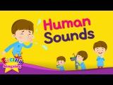 Kids vocabulary - Human Sounds - imitating sounds - English educational video for kids