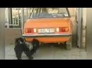 Собака СОСЕТ выхлопные газы автомобиля