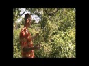 Чёрная малина Кумберленд опровергаем МИФ