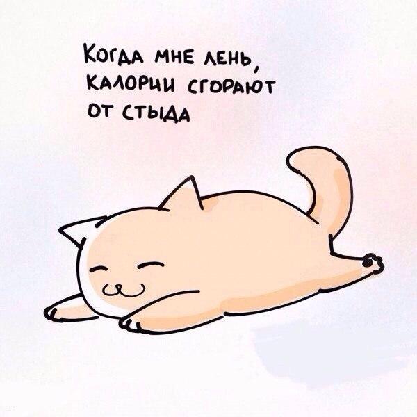 Жизненные принципы от котика