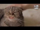 ILUMI LAND - Я кот а ты мой человек