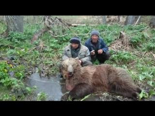 Браконьеры хвастают убитым в лесу медведем