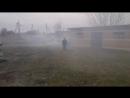їжак в тумані