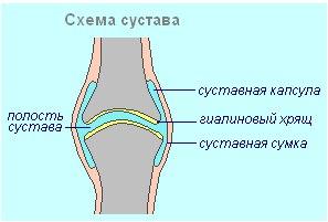 Подвижные суставы форум ушиб локтевого сустава сумка наполненная жидкостью