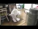 Кот моет полы
