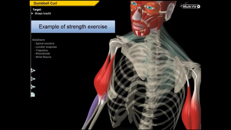 Biceps Brachii Muscle __ Build Proportioned Biceps - Anatomy Kinesiology