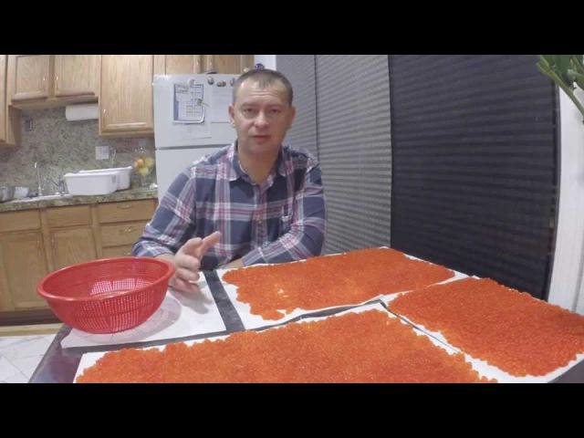 ИКРА ЛОСОСЕВАЯ. МАЛОСОЛЬНАЯ. Salmon roe to caviar 2014 Часть 1