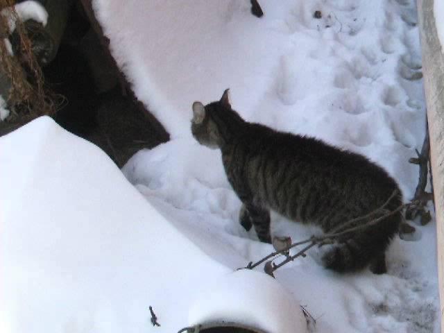 Весна близко или песня мартовских котов.AVI